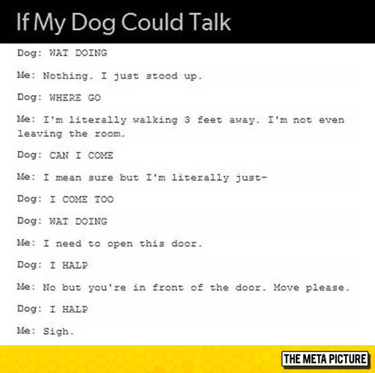 I Read This In The Dogs Voice From Up