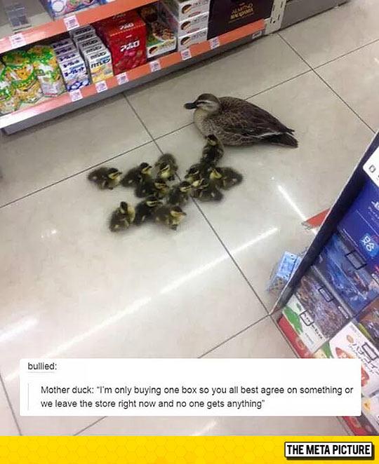 funny-duck-mother-babies-supermarket