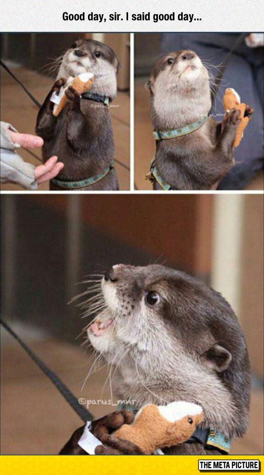 You May Not Take Away My Stuffed Animal