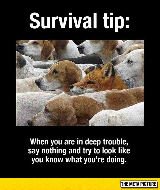 Important Survival Tip