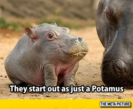 They Grow The Hippo Part Later