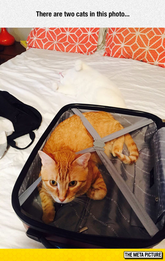 funny-invisible-white-cat-suitcase