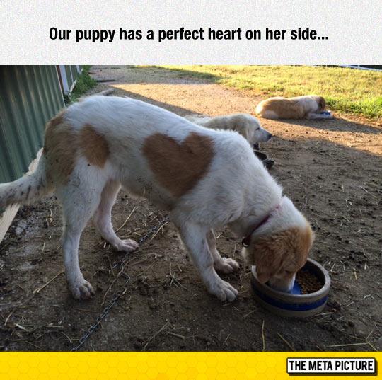 funny-puppy-heart-shape-spot