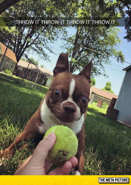 funny-puppy-tennis-ball-big-eyes