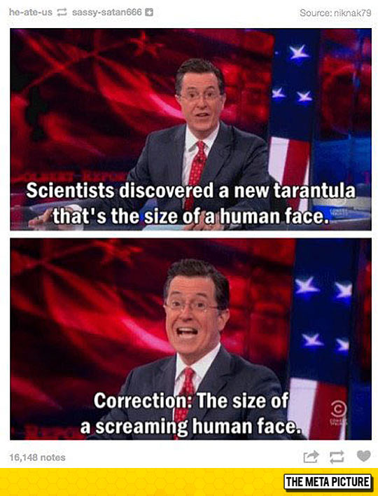 funny-spider-Stephen-Colbert-show