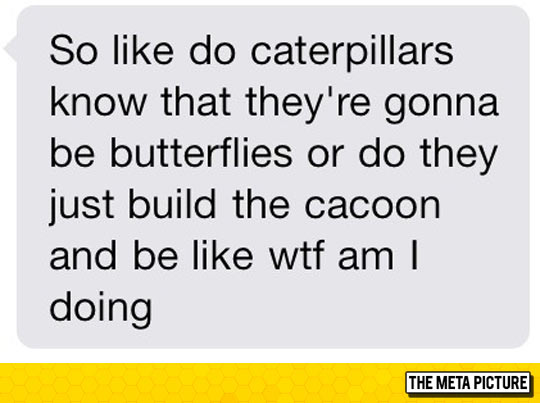 funny-text-message-quote-caterpillars