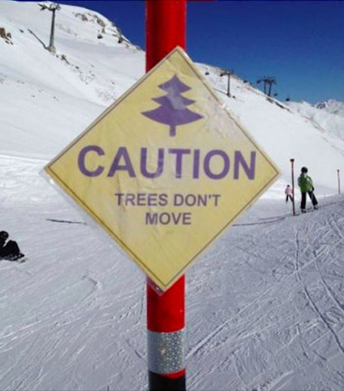 obvious-trees-move