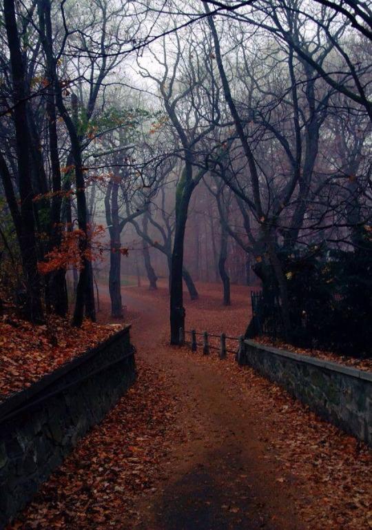 An eerie Fall morning