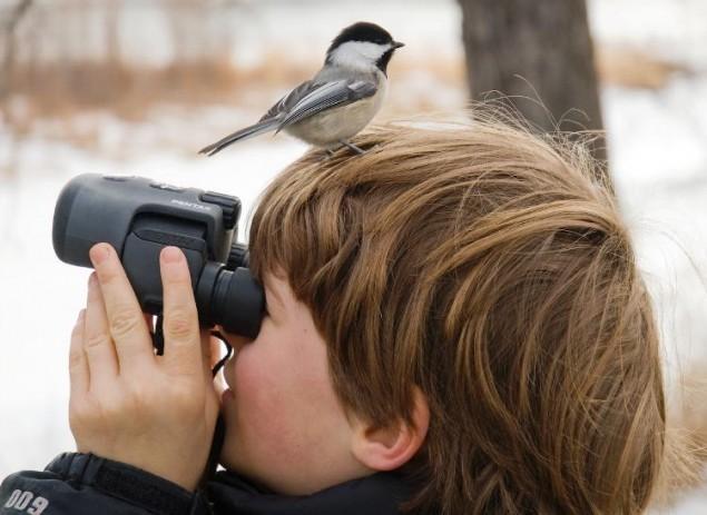 Birdwatching Fail