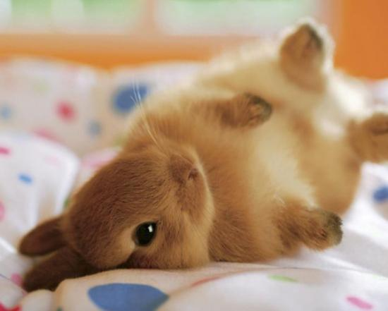 Bunny Belly