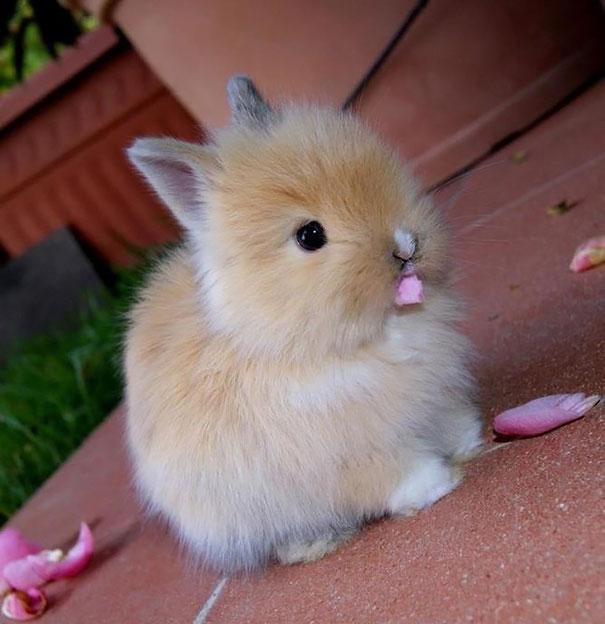 Cute Bunny Eating Flower Petals