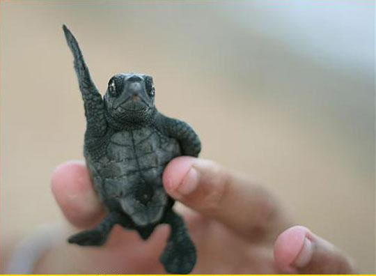 Disco Turtle Wants To Dance