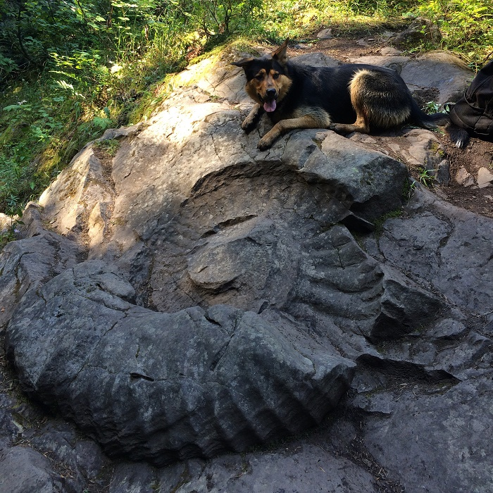 Giant Ammonite fossil and Otto