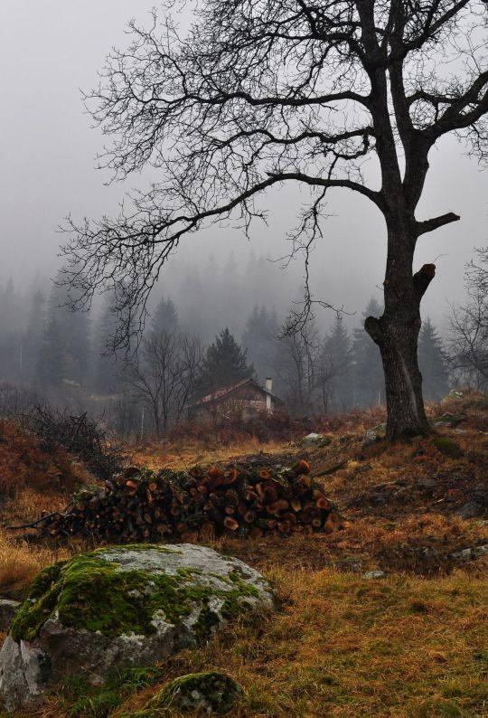 Moody autumn scene