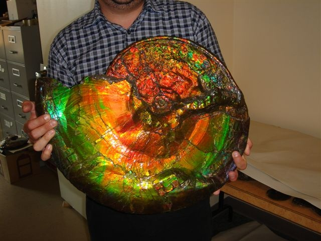 Opal Ammonite Fossil