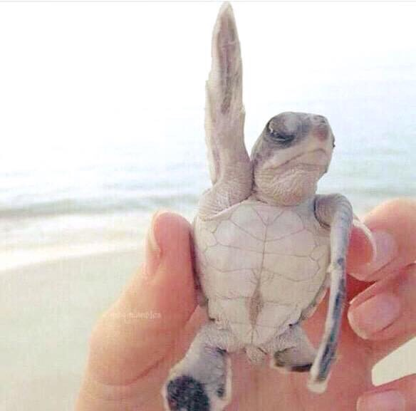 Raise your flipper in the air if you are the cutest turtle on the beach!
