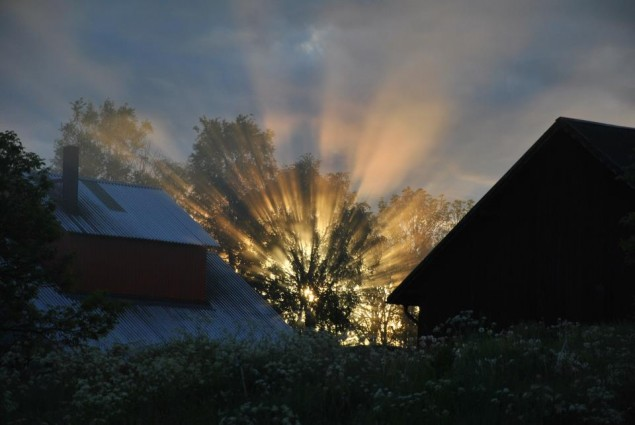 Sun Exploding Through a Tree in Sweden