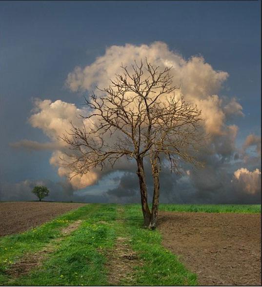 The Cloud Tree