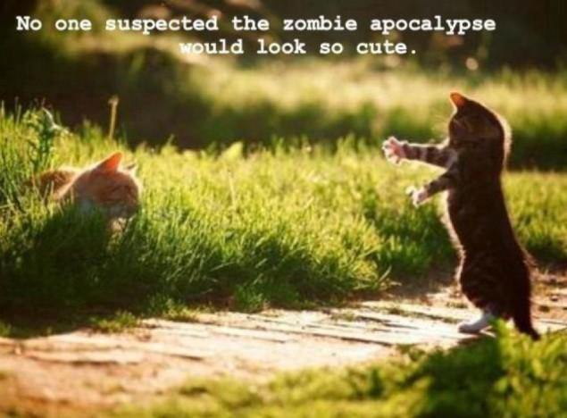 Zombie Kitty!