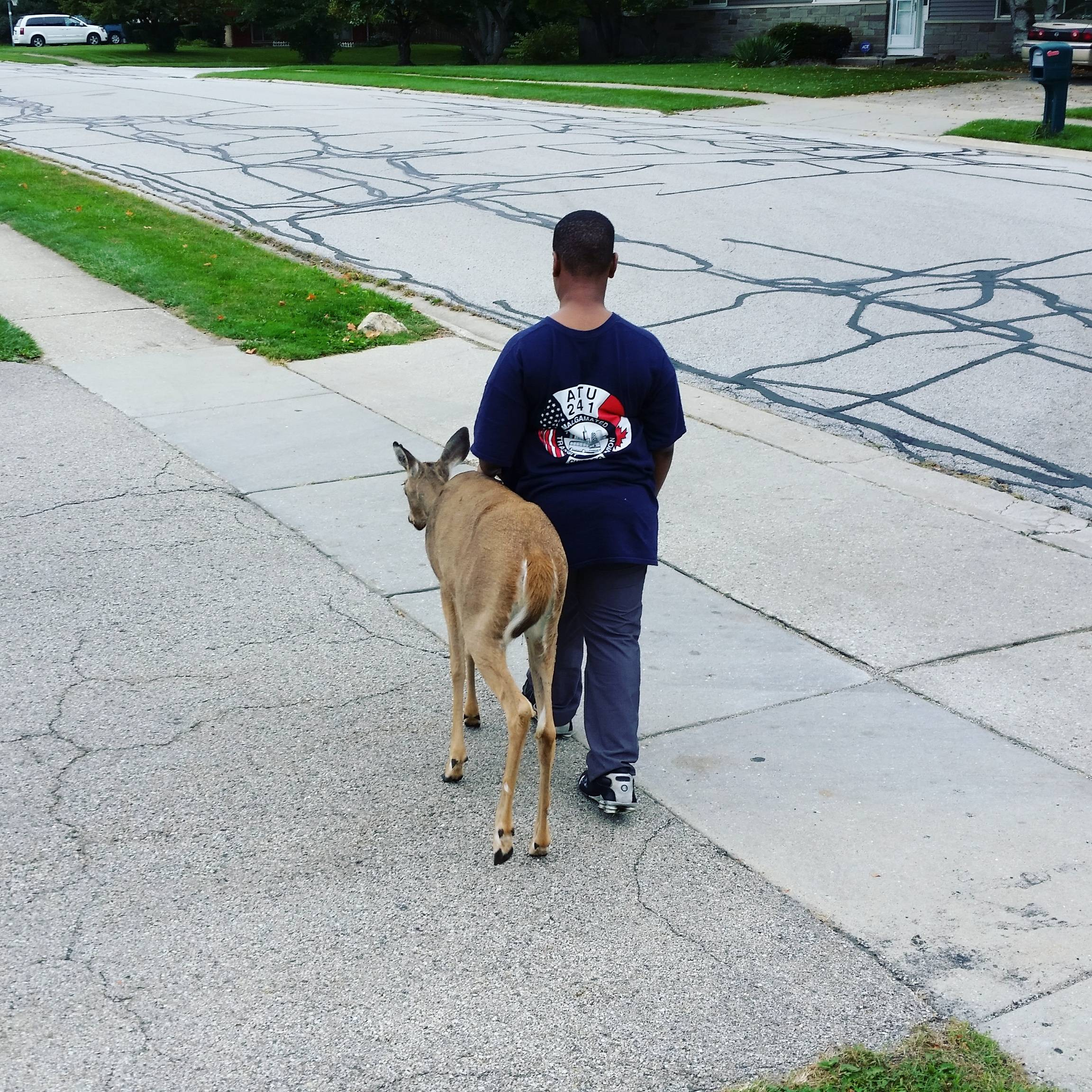 blind deer in our neighborhood and this boy (10 yrs old)