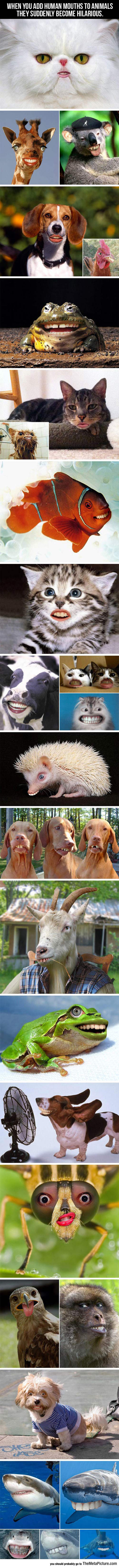 cool-animals-human-mouths-teeth