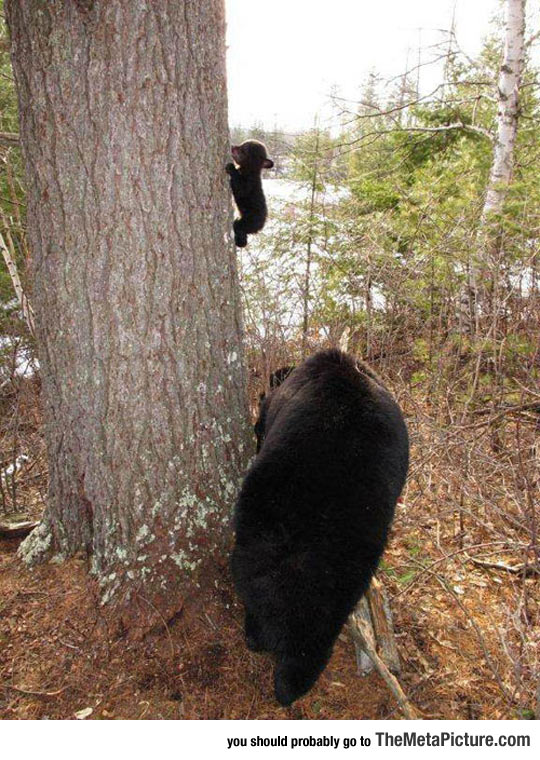cool-baby-bear-climbing-tree