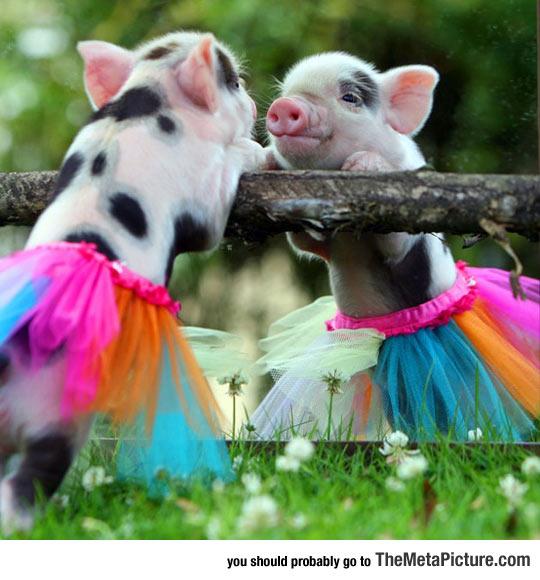 Pig In A Tiny Tutu