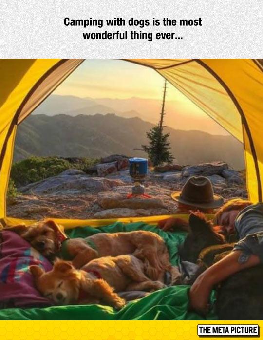 cool-camping-dog-tent-sleeping