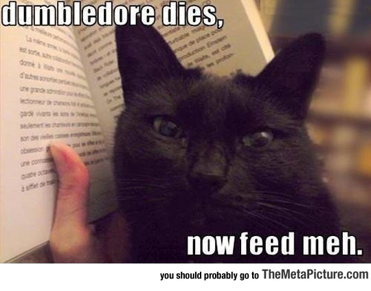 cool-cat-book-spoilers-Harry-Potter.jpg
