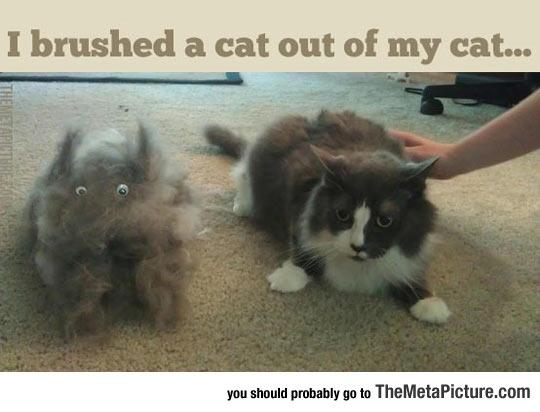 cool-cat-hair-eyes-rug