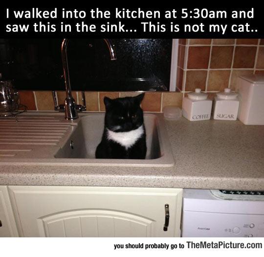 cool-cat-sink-kitchen