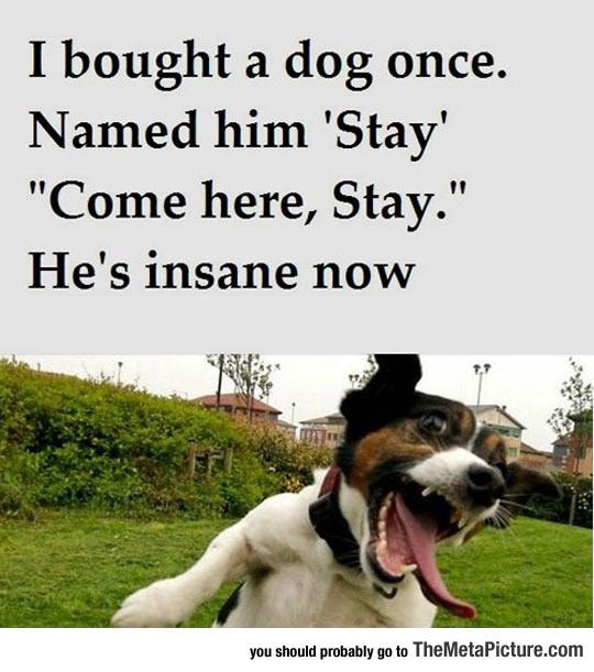 I Bought A Dog