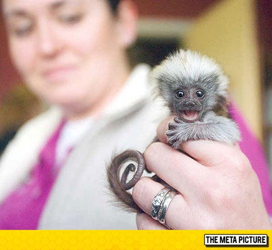 The Tiniest Monkey I