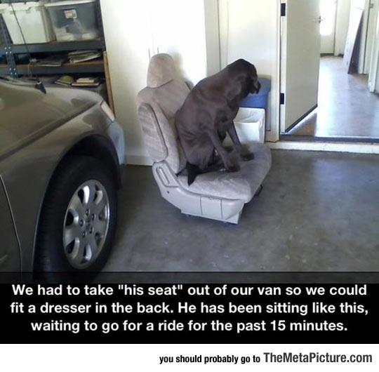 cool-dog-sitting-seat-car