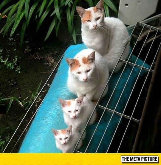 Matryoshka Kitties