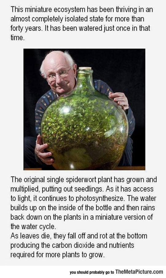 cool-miniature-plant-bottle-plants