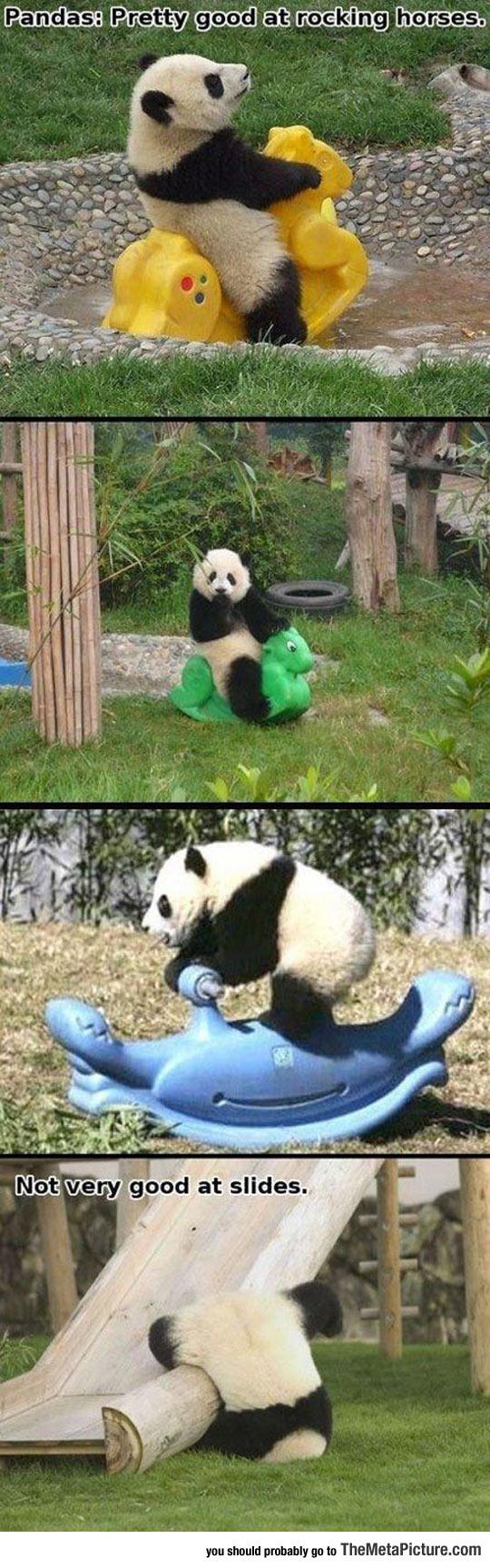 cool-panda-playing-rocking-horse
