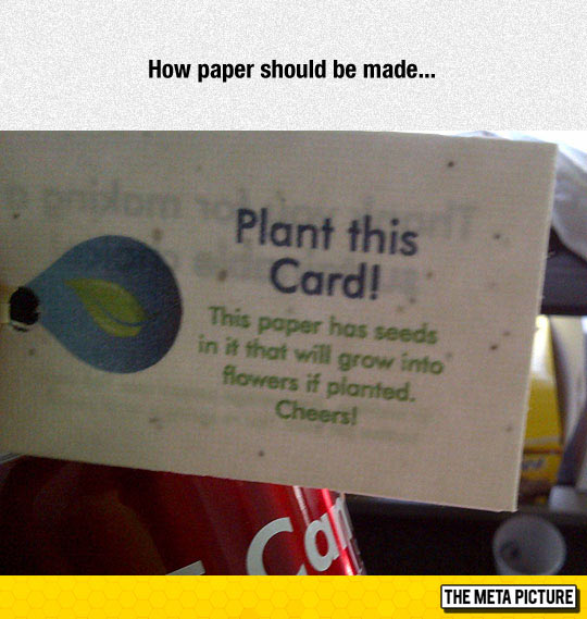 cool-paper-seeds-plant-tree