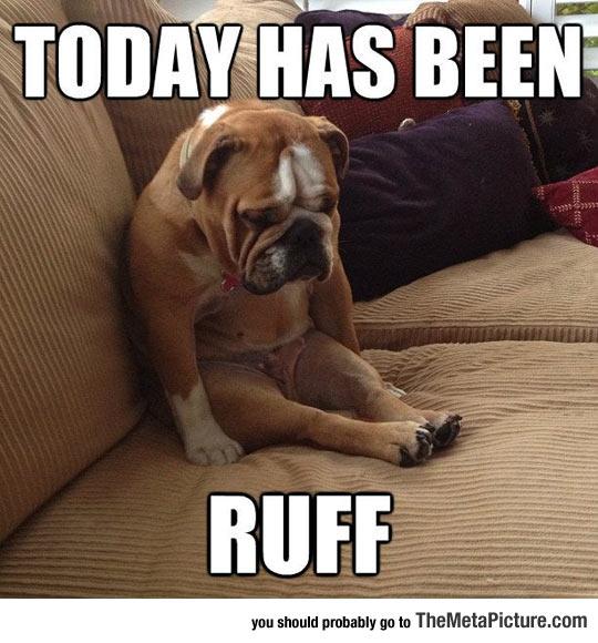 cool-sad-Bulldog-dog