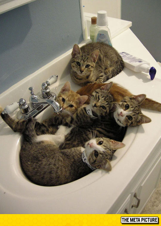 cool-sink-full-of-cats-kittens