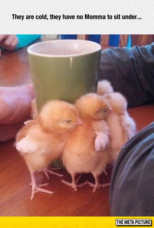 cute-chickens-warm-mug