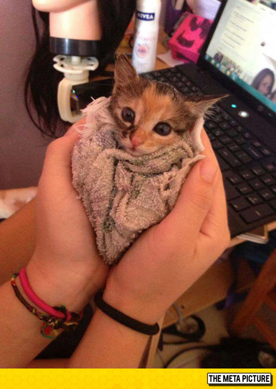 Just A Little Purrito