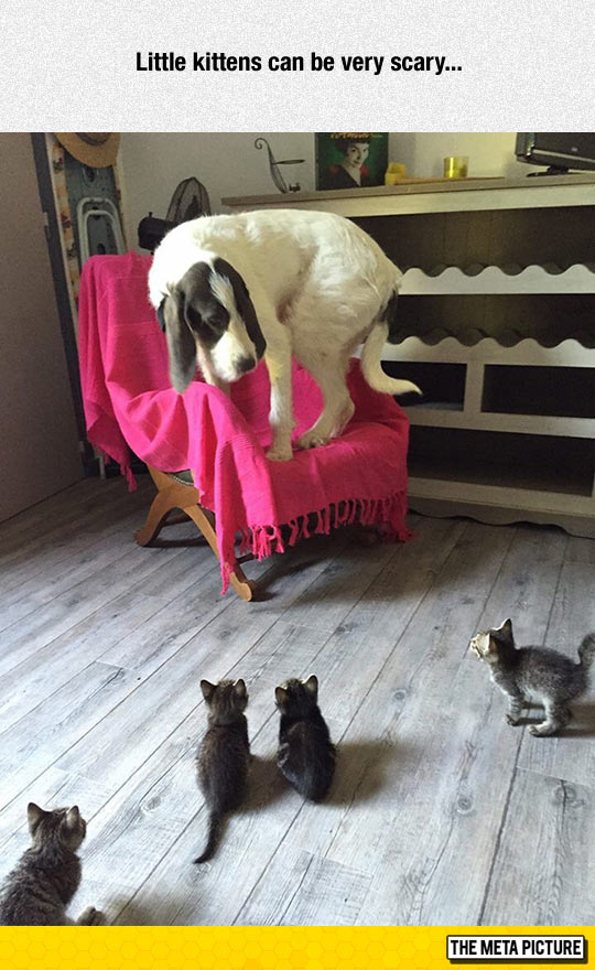 cute-kittens-playing-big-dog