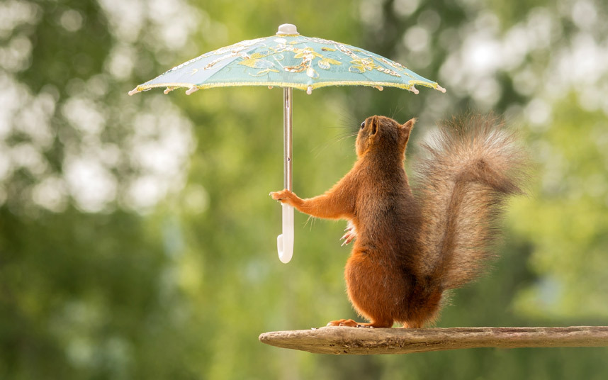 every squirrel needs protection from the sun