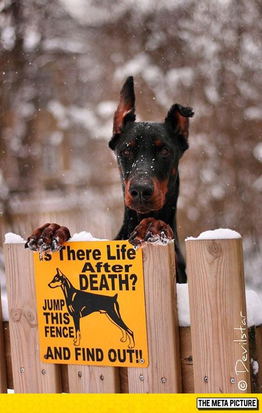 funny-Doberman-dog-sign-life-after-death