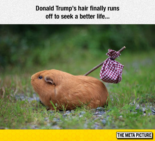 funny-Donald-Trump-hair-elections