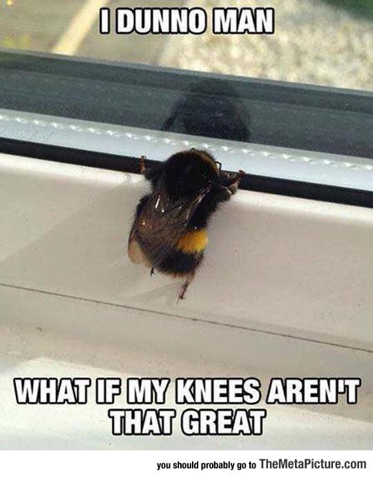 funny-bees-knees-cute-window