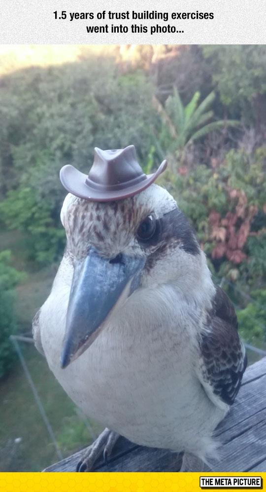 funny-bird-tiny-hat