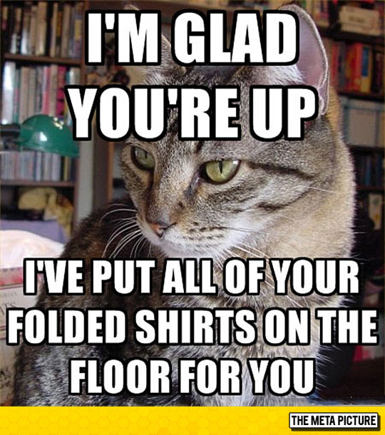 Helpful Feline Companion