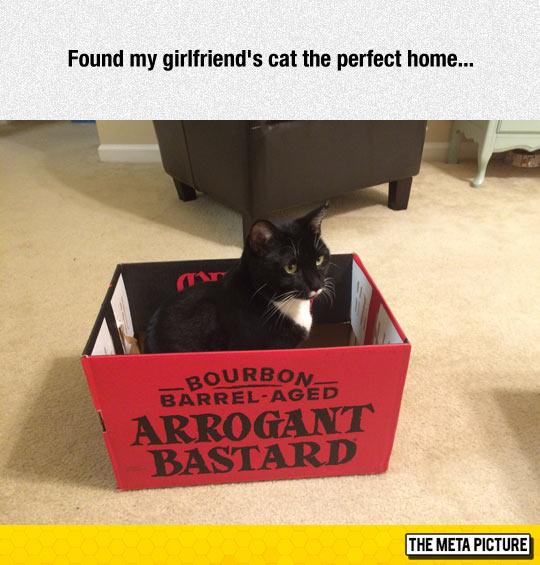 funny-cat-inside-cardboard-box-fort